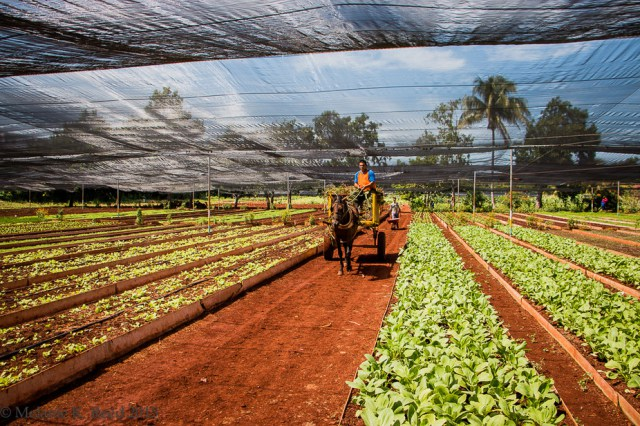 Organic farm, Alamar. Melanie Lukesh Reed/Flickr, CC BY-NC-ND