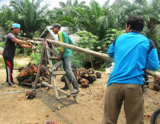 An Indonesian oil palm smallholder sells fruit bunches to a trader. Lesley Potter, Author provided