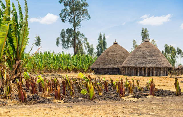 Ethiopia has seen massive improvements in areas like infrastructure following success in agriculture. Shutterstock